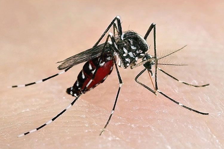 Zika_image3