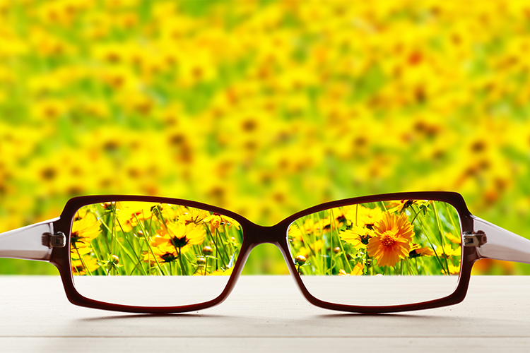 glasses in field of flowers